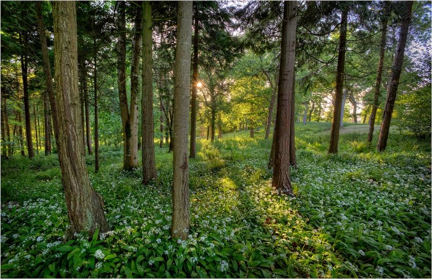 Grange-Heath-Forest-E0566-11x17 copy