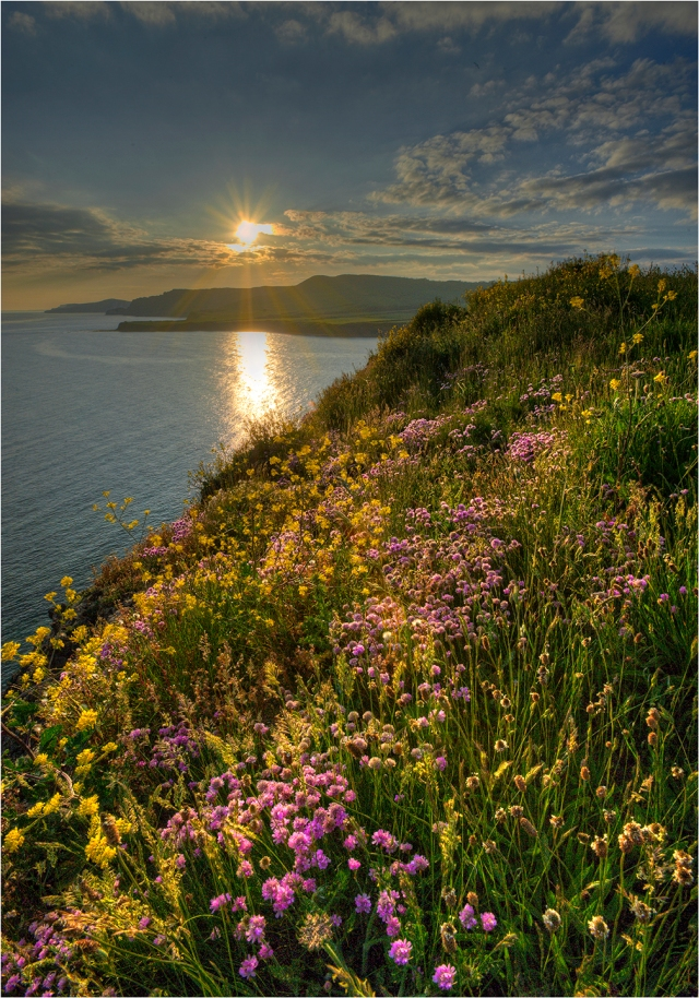 Summer-Blooms-Kimmeridge-Bay-E0543-14x20 copy