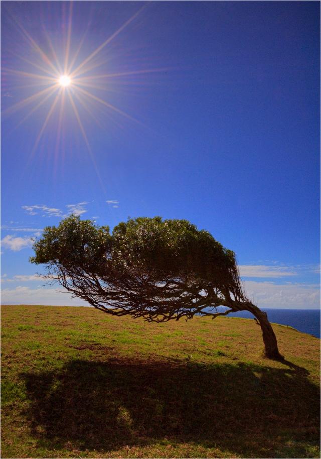 Lone-Tree-and-Sunstar-NI0274-14x20 copy