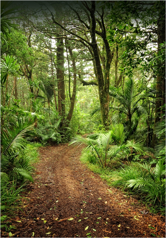 Rainforest-Norfolk-Island-NI03-14x20 copy