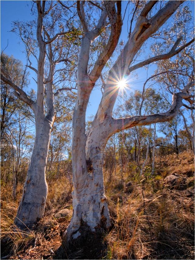 Sunstar-Bushland-Mount-Ainslie
