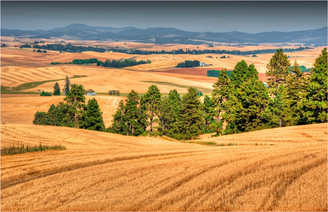 The-Palouse-WSH023-11x17