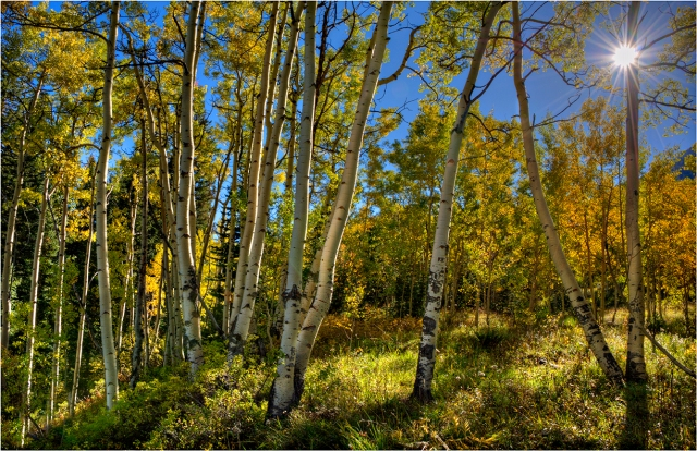 Castle-Creek-Aspens-Fall-Colour-CLD038-11x17 copy