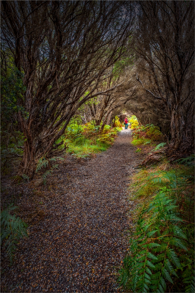 Bushland-Track-KI0597-16x24