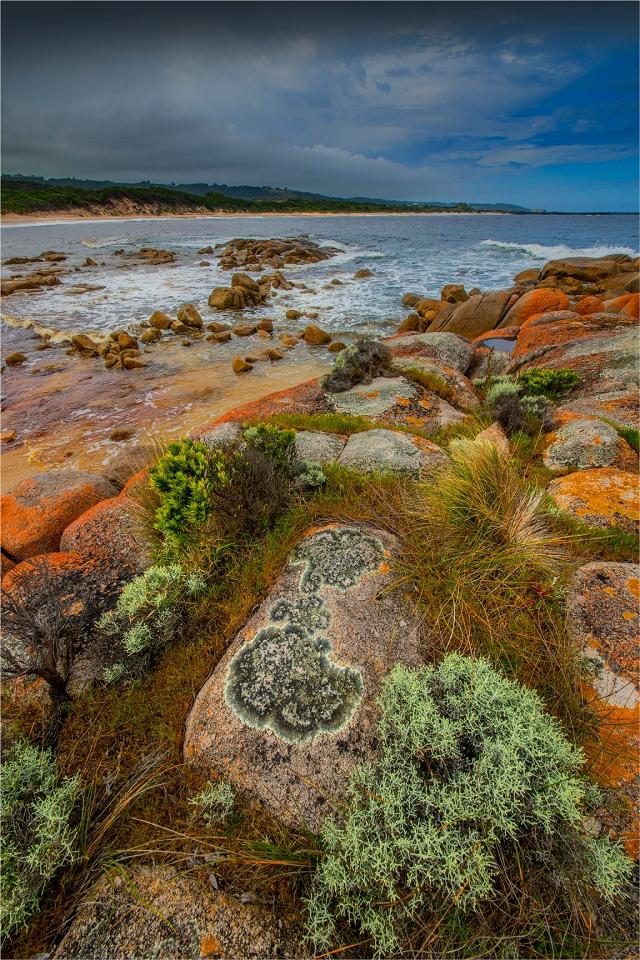 Grassy-Beach-KI0603-16x24