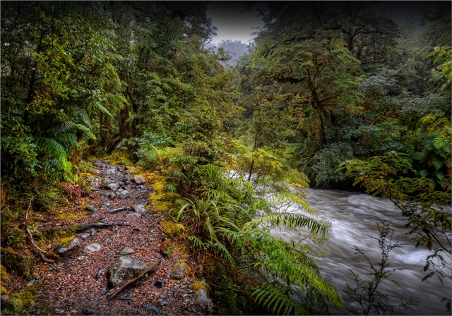Milford-Track-Rainforest-NZ056-14x20 copy