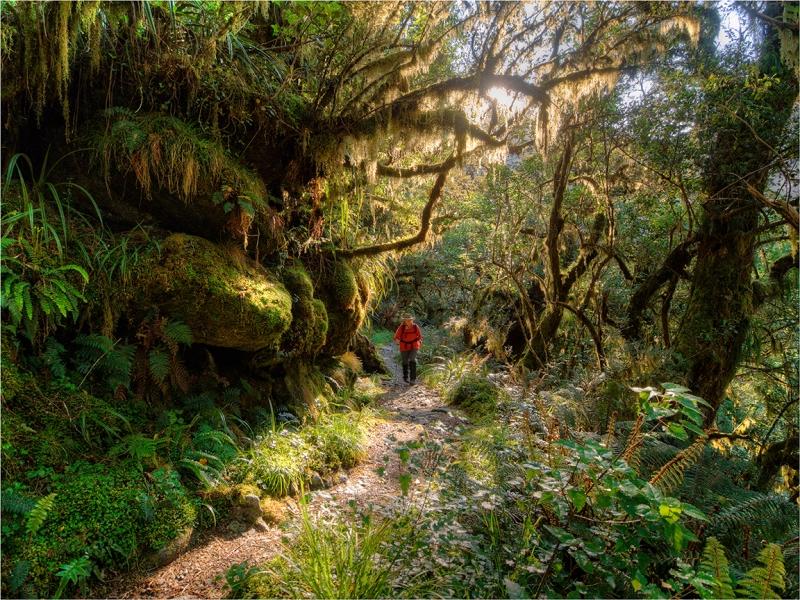 Walking-the-Milford-Track-NZ036-12x16 copy