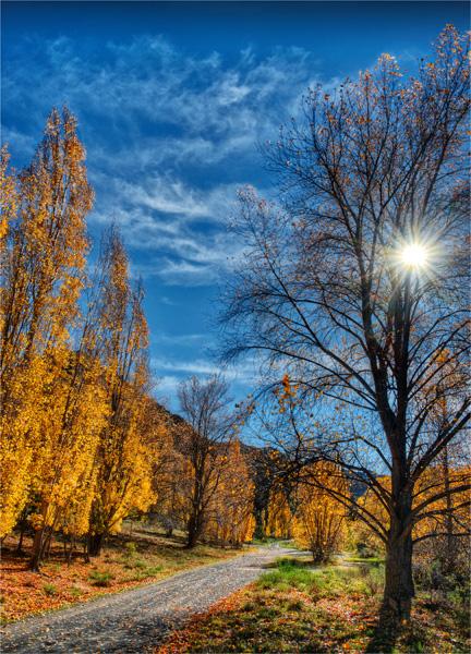 Autumn-Sunstar-NZ0248-18x25