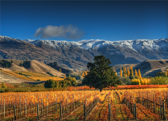 Cromwell-Autumn-NZ0252-18x25