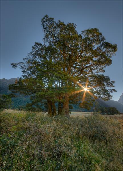 Eglinton-Valley-Sunstar-NZ0256-18x25