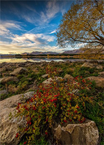 Lake-Tekapo-Autumn-NZ0276-18x25