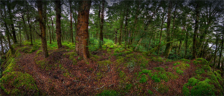 Rainforest-FiordlandNP-NZ0317-15x35
