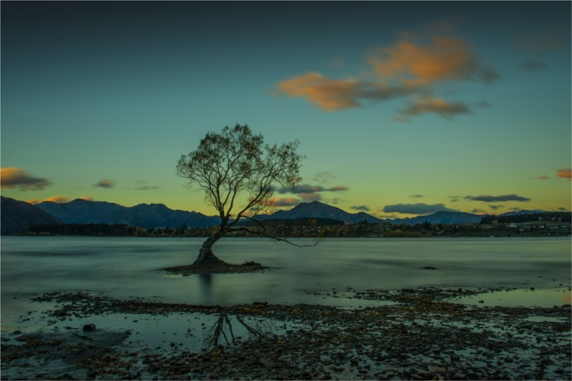 Wanaka-Tree-NZ0330-16x24