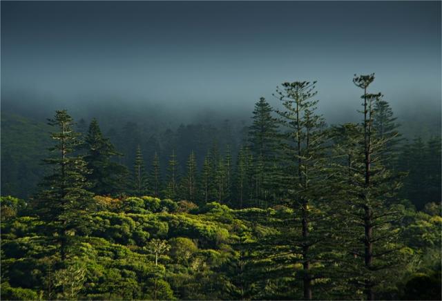 Rising-Mist-National-Park-NI046-15x22