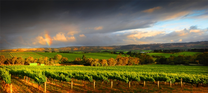 McClarenvale-Vineyards-PAN0427-18x40