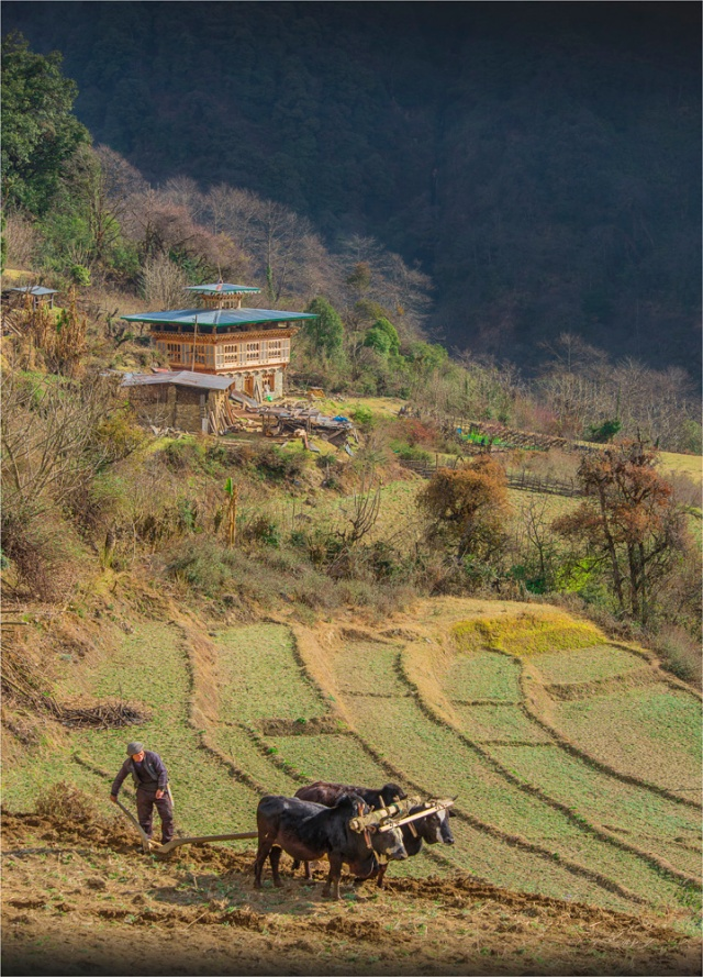 _ICR0167-Farming-BHU0-18x25