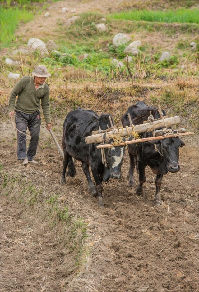 Rice-Farmer-BHU052-17x25