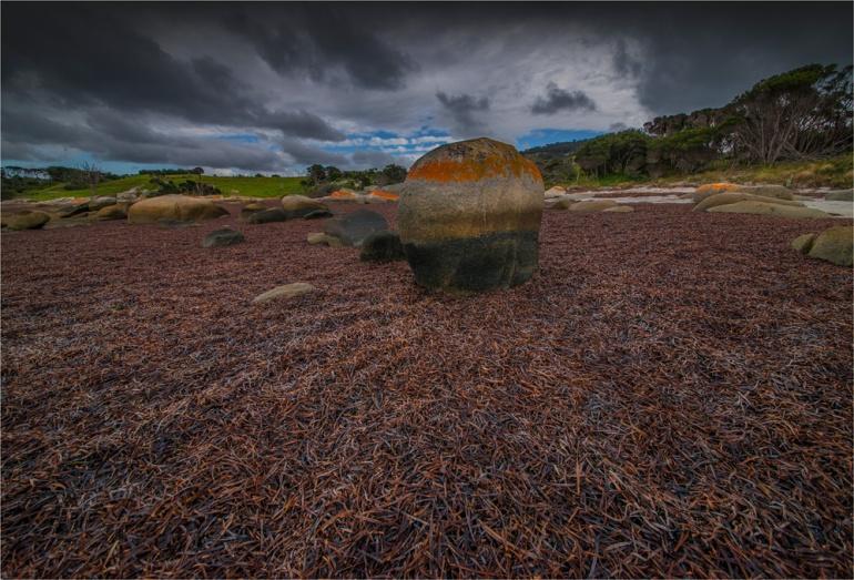 Sawyers-Bay-low-tide-FI0394-17x25