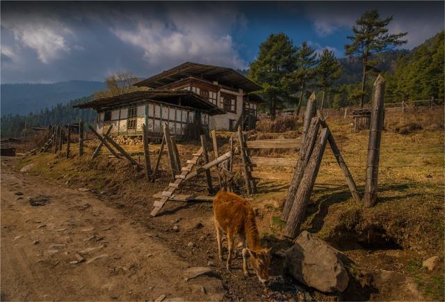 Trongsa-Valley-BHU0106-17x25
