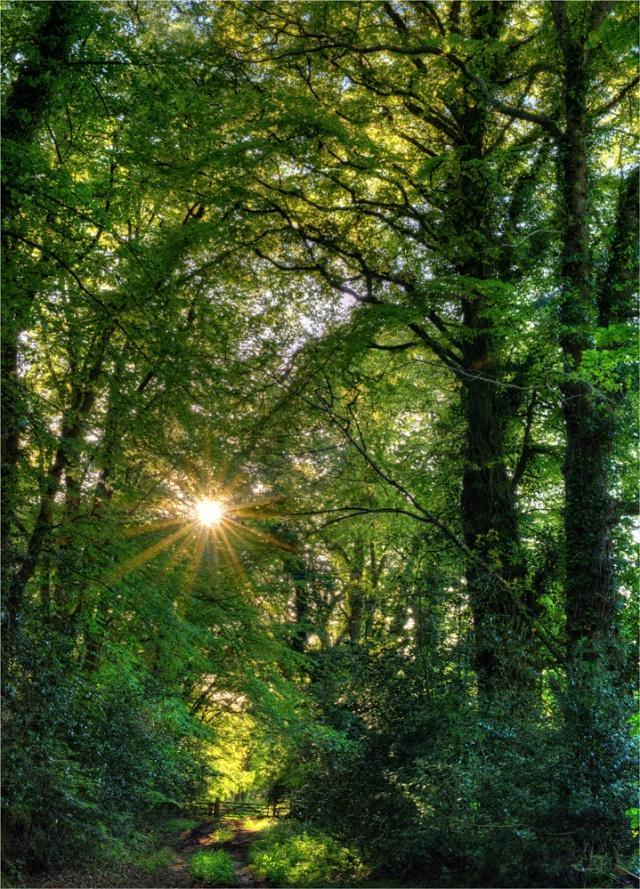 Creech-Forest-Sunburst-E0-18x25 copy