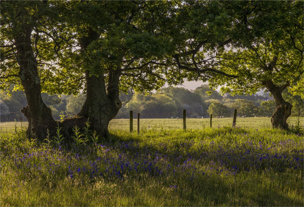 Dawn-Light-Stokeford-E01015-17x25 copy