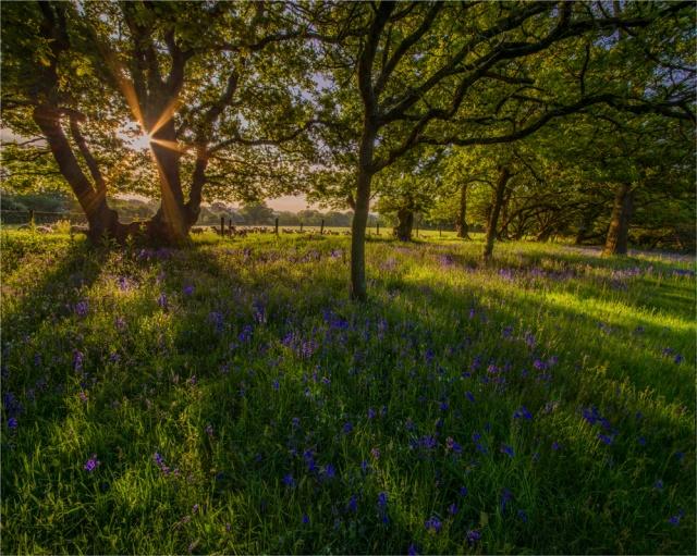Early-light-Stokeford-E01002-20x25 copy
