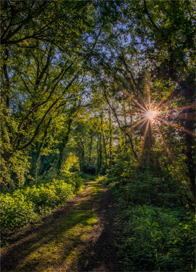 Frome-Meadows-Sunburst-E0-18x25 copy