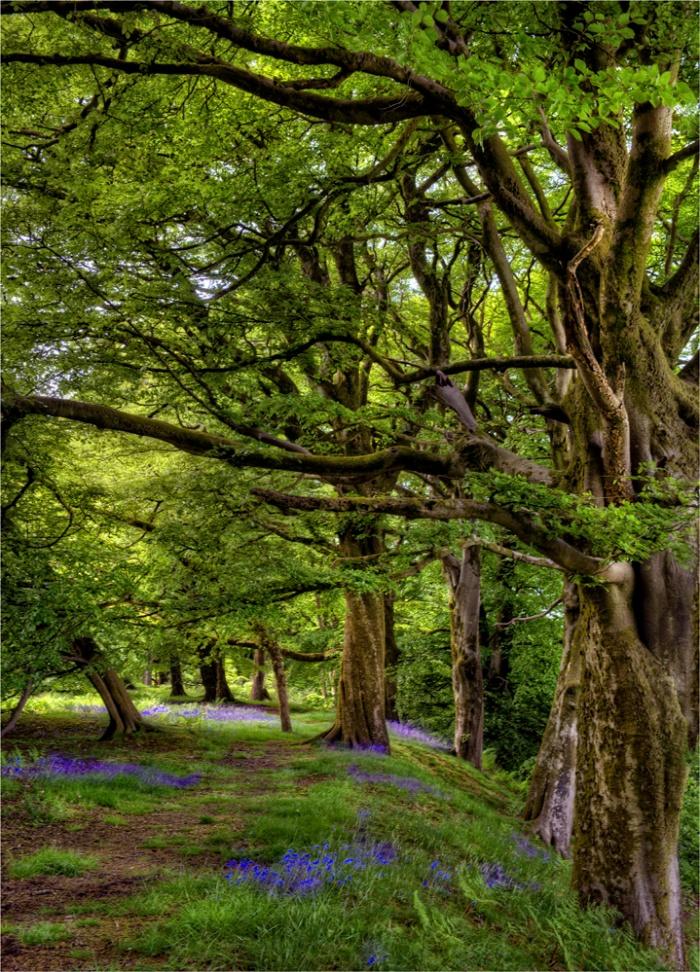Lewesdon-Hill-Springtime-E0-18x25