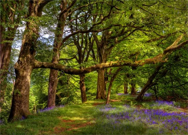 Lewesdon-Spring-E0-18x25