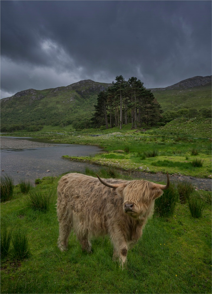 Hairy-Highlander-SCT0439-18x25
