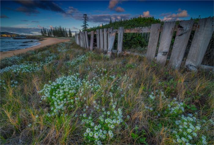 Alysium-Blooms-Cemetery-Bay-NI0497-17x25 copy