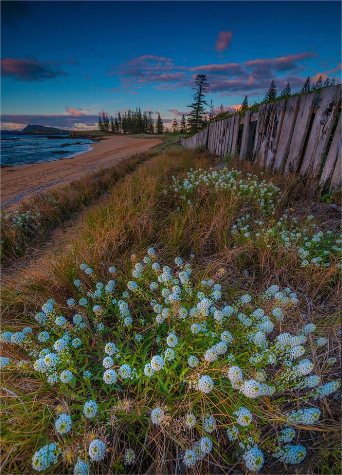 Alysium-Blooms-Cemetery-Bay-NI0498-18x25 copy