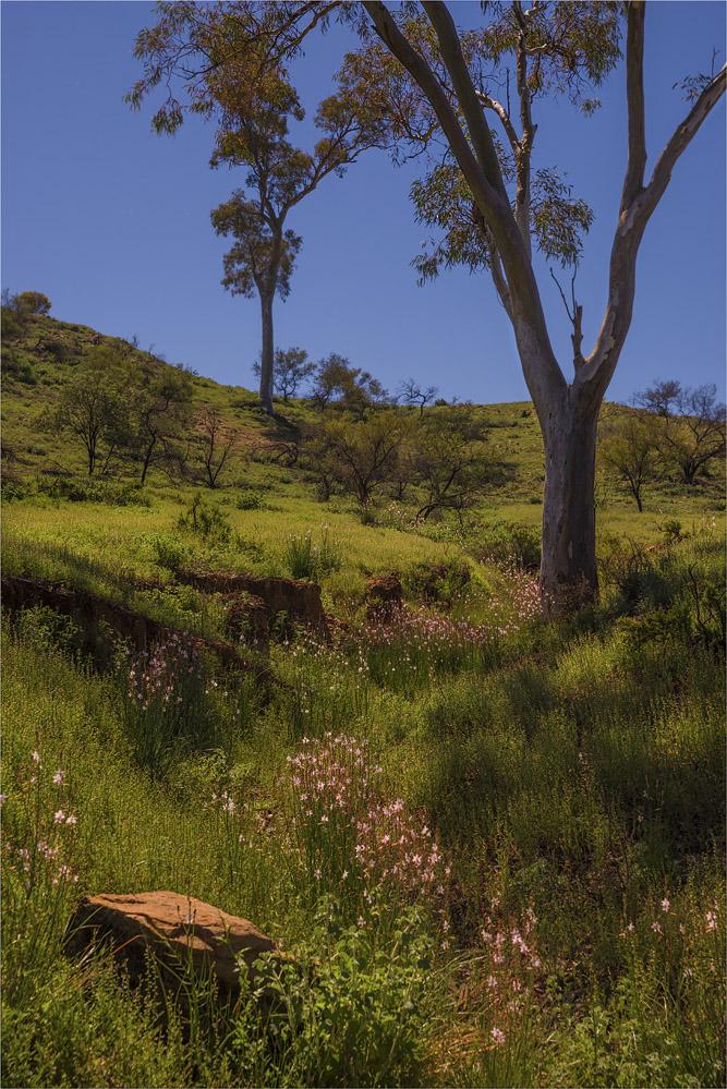 Brachina-Gorge-Spring-SA-FR011-18x25