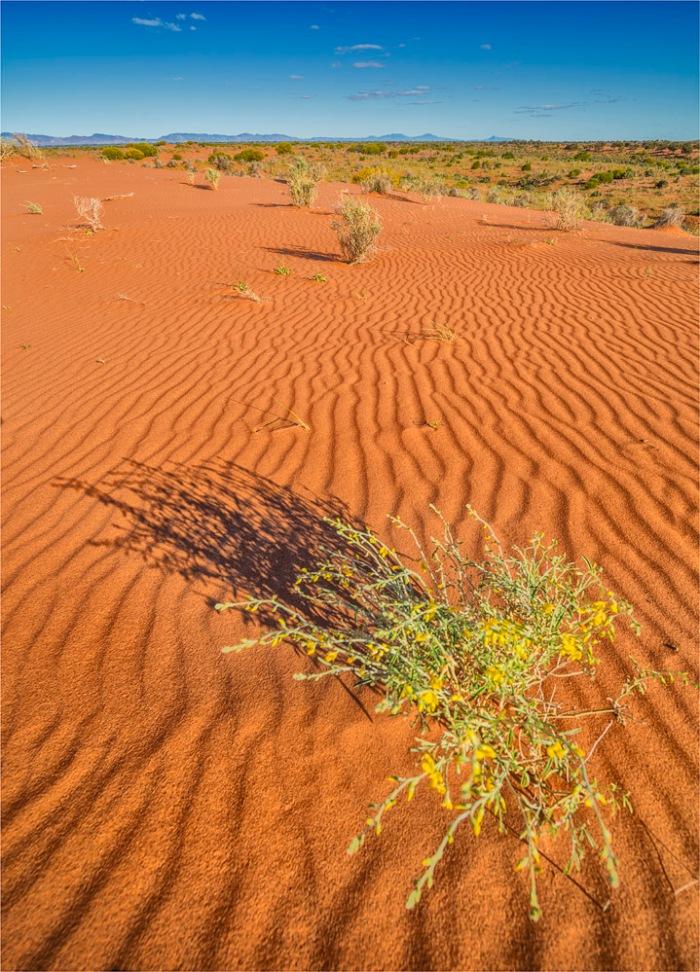 Sand-Hills-Nilpena-SA-FR024-18x25