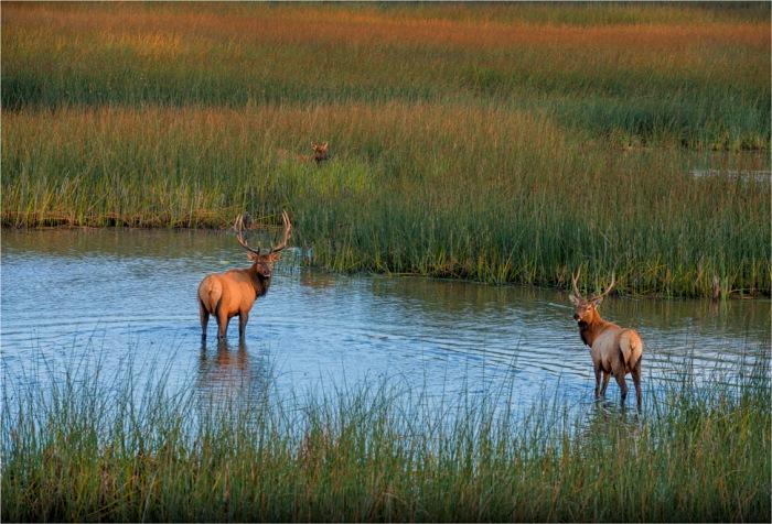 Elk-Smith-River-2015-09-US-ORE013-17x25