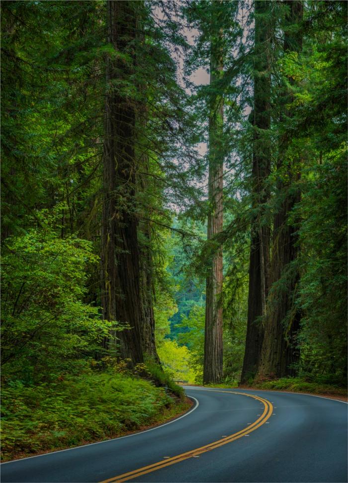 Humboldt-Redwoods-Reserve-2015-09-US-CAL006-18x25