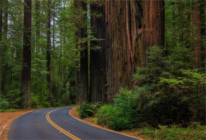 Humboldt-Redwoods-Reserve-2015-09-US-CAL022-17x25