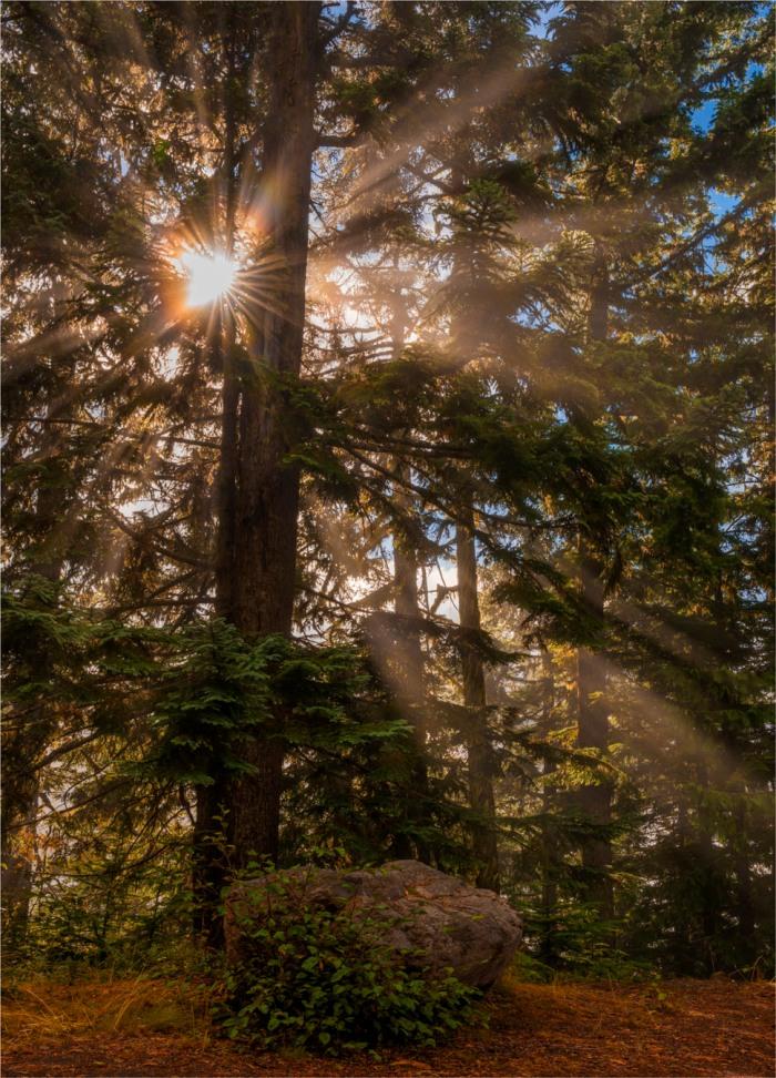 Mt-Rainier-NP-2015-09-US-WASH062-16x20