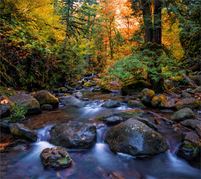 Multinomah-Creek-in Autumn-2015-09-US-ORE0121-25x28