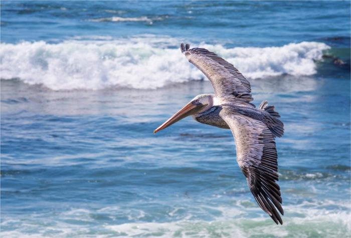 Piedras-Blancas-Marine-Park-2015-09-US-CAL287-17x25