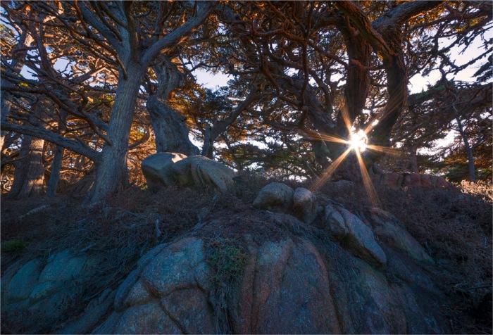 Point-Lobos-Carmel2015-09-US-CAL047-17x25