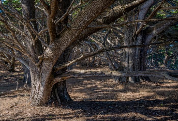 Point-Lobos-Cypress-2015-09-US-CAL002-17x25