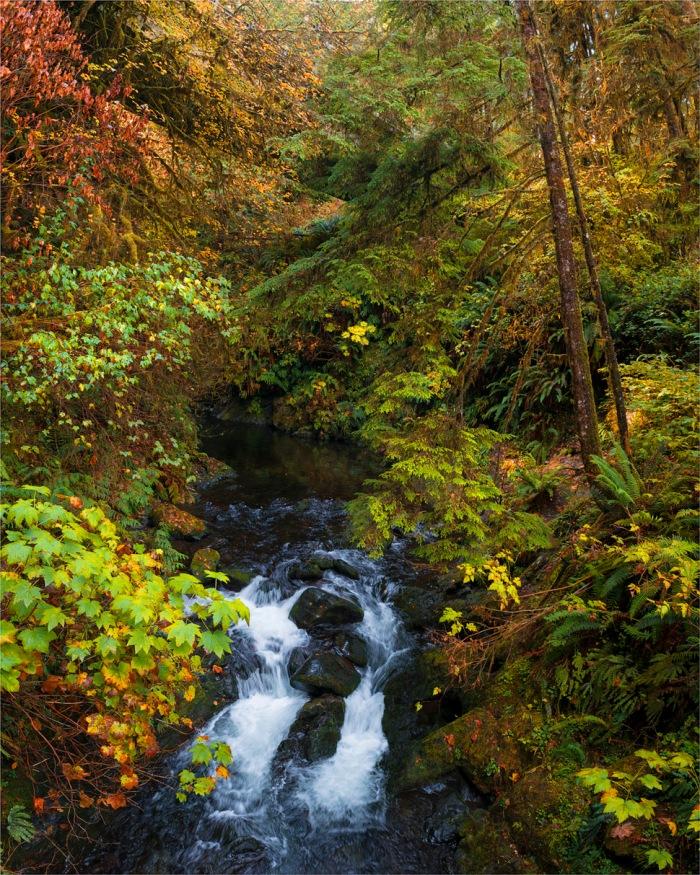 Quinault-Rainforest-2015-09-US-WASH029-Pano