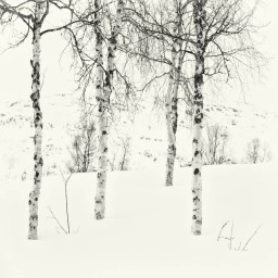 Fossbakken-Arctic-Circle-2016-NOR0012