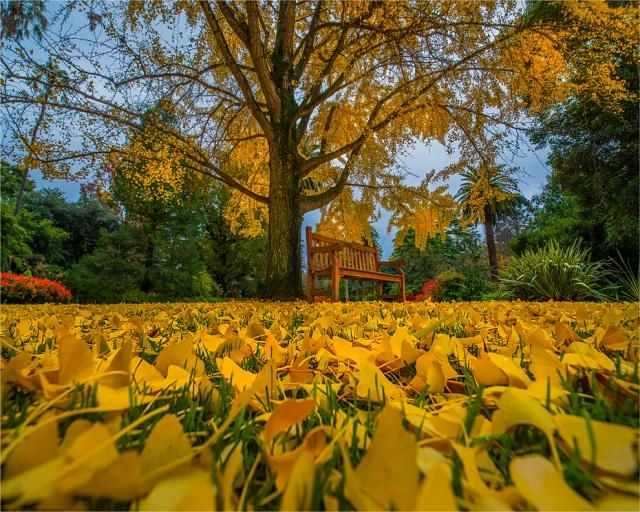 Albury-Gardens-Autumn-VIC-016-20x25