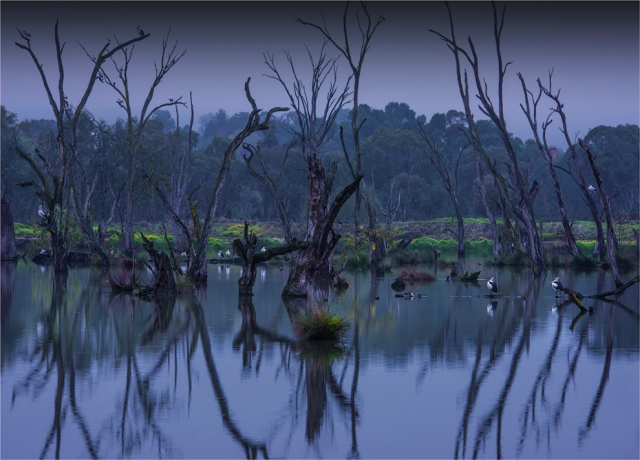 Albury-Murray-River-Wetlands-VIC-030-18x25