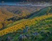 Bullengarook-Countryside-VIC-007-20x25