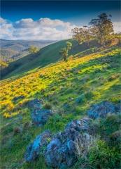 Bullengarook-Countryside-VIC-010-18x25