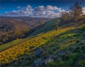 Bullengarook-Countryside-VIC-012-20x25