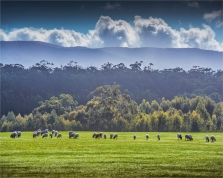 Hesket-Countryside-VIC-005-20x25